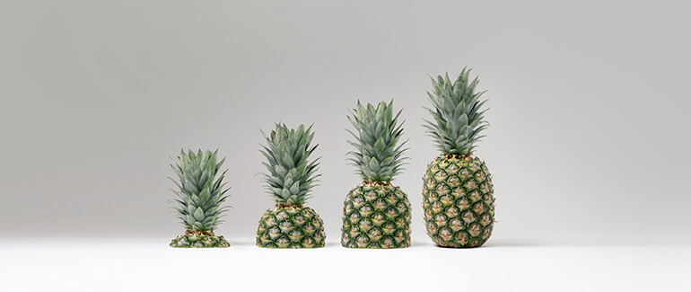 Pineapples growth